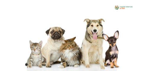 veterinarios en Murcia La flota